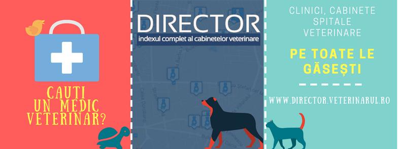 Director mainbody