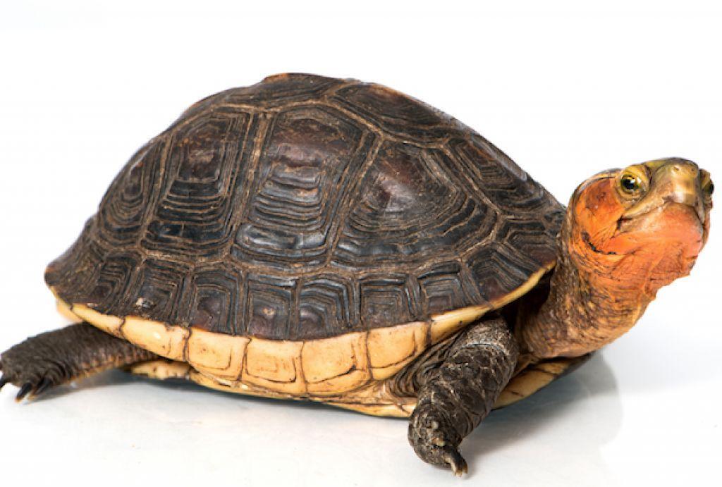 țestoase entourage pierdere în greutate cât de repede se arde grasimea corporală