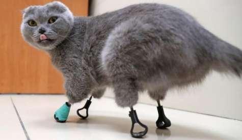 O noua sansa la viata pentru o pisica cu labutele amputate