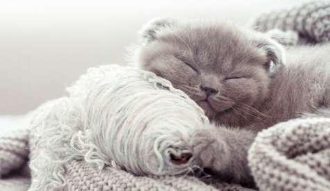 De ce sta treaza pisica noaptea