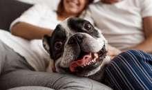 Persoanele empatice reflecta mai puternic expresivitatea canina