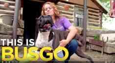 Bugso, boxerul cu trei picioare